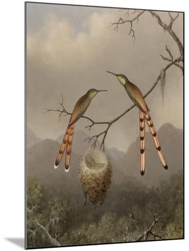 Two Hummingbirds with Their Young, c.1865-Martin Johnson Heade-Mounted Giclee Print