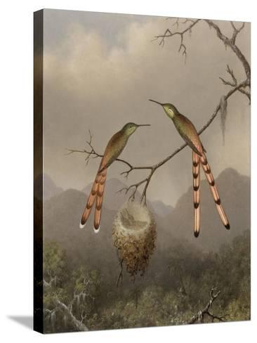 Two Hummingbirds with Their Young, c.1865-Martin Johnson Heade-Stretched Canvas Print