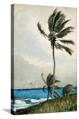 Palm Tree, Nassau, 1898-Winslow Homer-Stretched Canvas Print