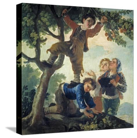 Boys Picking Fruit, 1779-80-Francisco de Goya-Stretched Canvas Print