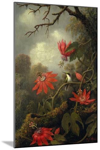 Hummingbird and Passionflowers, c.1875?85-Martin Johnson Heade-Mounted Giclee Print