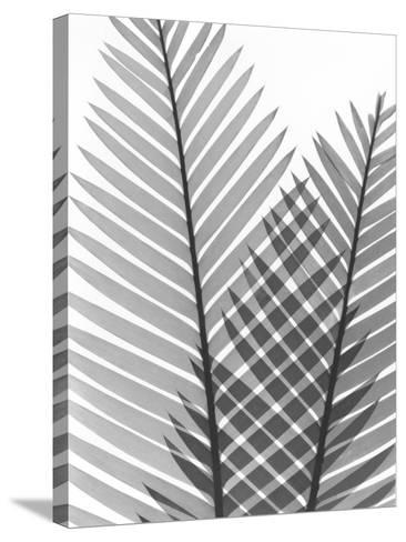Tropical Fern 1-Albert Koetsier-Stretched Canvas Print