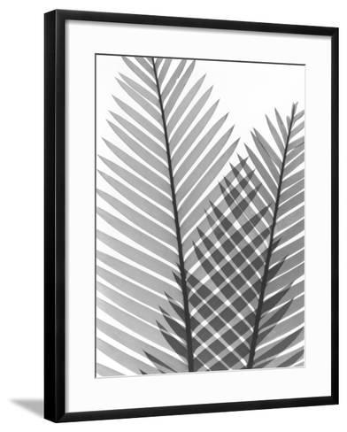 Tropical Fern 1-Albert Koetsier-Framed Art Print
