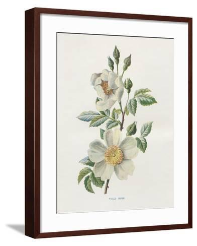 Field Rose-Gwendolyn Babbitt-Framed Art Print