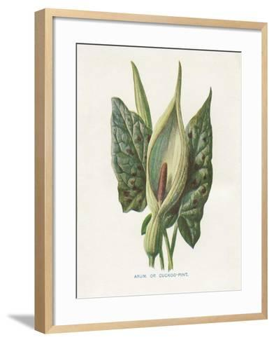 Green Arum-Gwendolyn Babbitt-Framed Art Print