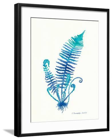 Ombre Fern II-Gwendolyn Babbitt-Framed Art Print