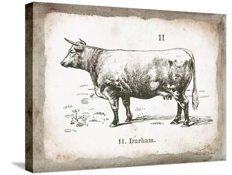 French Cow II-Gwendolyn Babbitt-Stretched Canvas Print