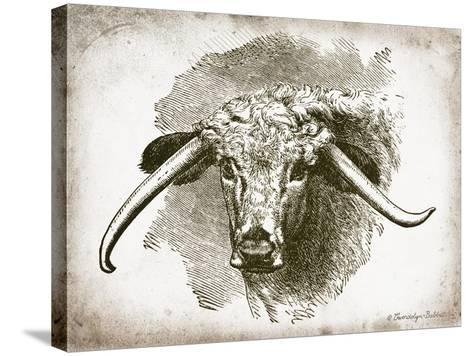 Cow Face II-Gwendolyn Babbitt-Stretched Canvas Print