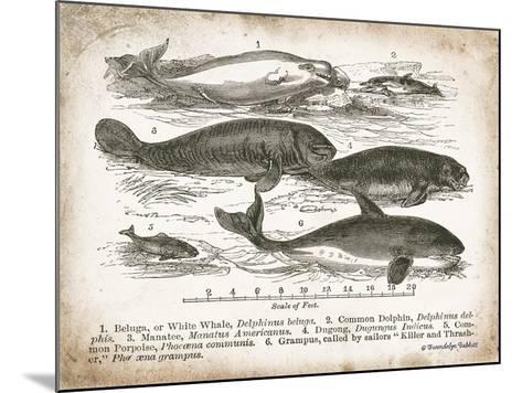 Antique Whales I-Gwendolyn Babbitt-Mounted Art Print