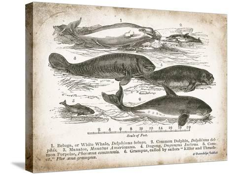 Antique Whales I-Gwendolyn Babbitt-Stretched Canvas Print