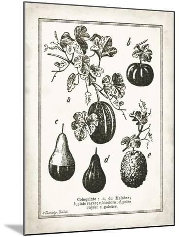 French Gourds-Gwendolyn Babbitt-Mounted Art Print