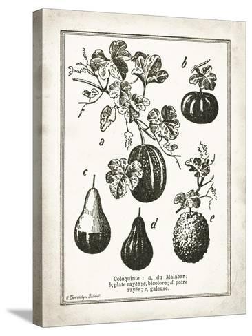 French Gourds-Gwendolyn Babbitt-Stretched Canvas Print