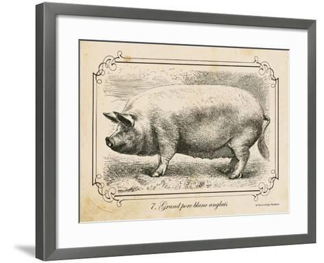 Farm Pig II-Gwendolyn Babbitt-Framed Art Print