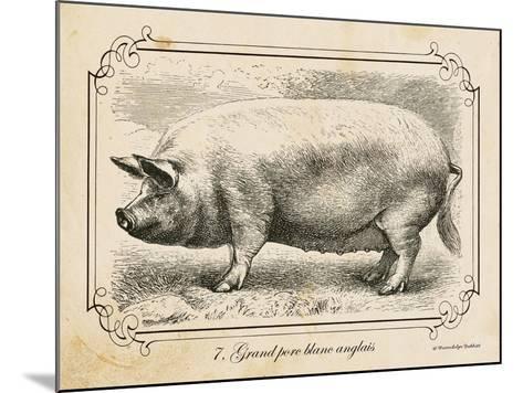 Farm Pig II-Gwendolyn Babbitt-Mounted Art Print