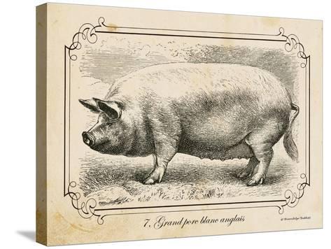 Farm Pig II-Gwendolyn Babbitt-Stretched Canvas Print