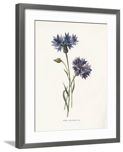 Corn Blue-Bottle-Gwendolyn Babbitt-Framed Art Print