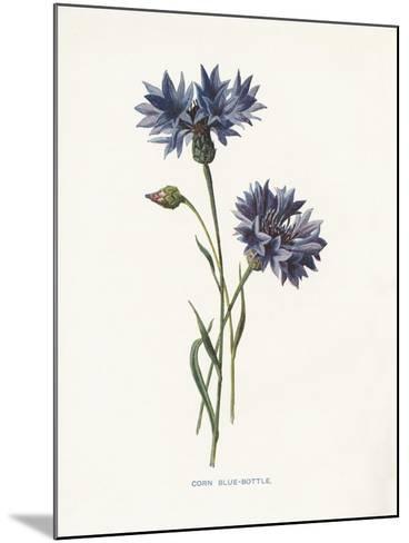 Corn Blue-Bottle-Gwendolyn Babbitt-Mounted Art Print