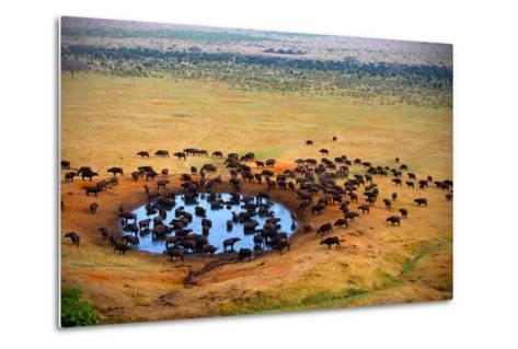 Buffalo at the Source-Andrzej Kubik-Metal Print