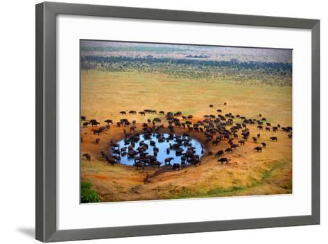 Buffalo at the Source-Andrzej Kubik-Framed Art Print