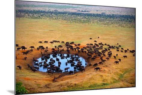 Buffalo at the Source-Andrzej Kubik-Mounted Photographic Print