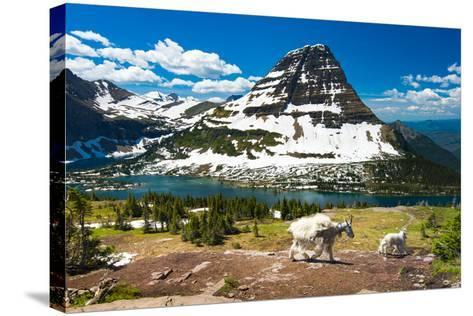Mountain Goats and Hidden Lake, Glacier National Park- Pung-Stretched Canvas Print