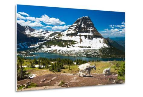 Mountain Goats and Hidden Lake, Glacier National Park- Pung-Metal Print