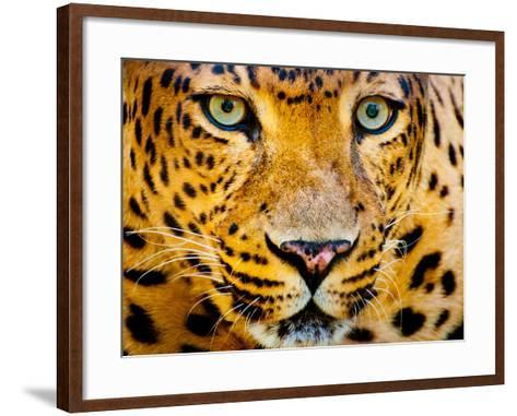 Close up Portrait of Leopard with Intense Eyes-Rob Hainer-Framed Art Print
