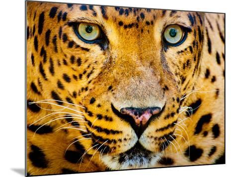 Close up Portrait of Leopard with Intense Eyes-Rob Hainer-Mounted Photographic Print