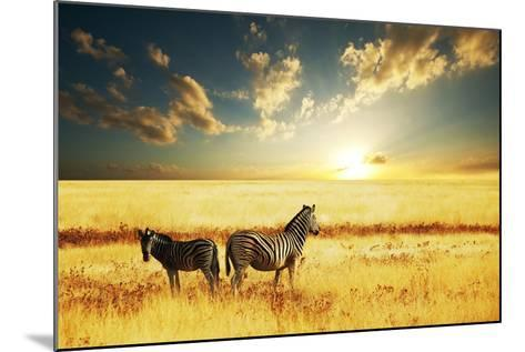 Zebras at Sunset-Galyna Andrushko-Mounted Photographic Print
