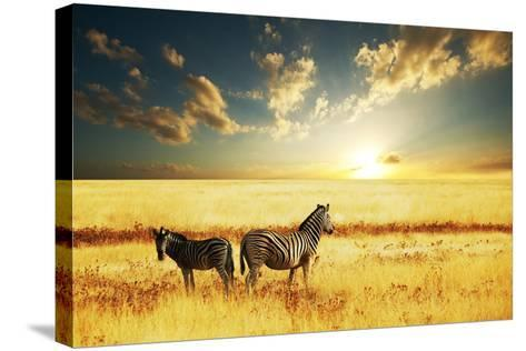 Zebras at Sunset-Galyna Andrushko-Stretched Canvas Print