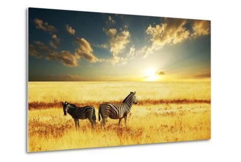 Zebras at Sunset-Galyna Andrushko-Metal Print