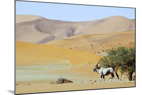Wandering Dune of Sossuvlei in Namibia with Oryx Walking on It-Damian Ryszawy-Mounted Photographic Print