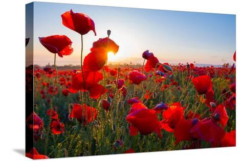 Early Morning Red Poppy Field Scene-Yuriy Kulik-Stretched Canvas Print
