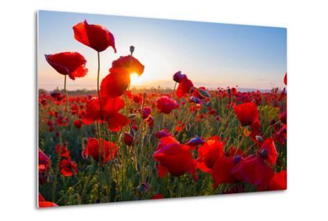 Early Morning Red Poppy Field Scene-Yuriy Kulik-Metal Print