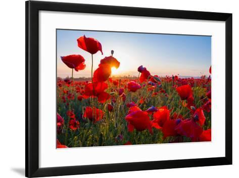 Early Morning Red Poppy Field Scene-Yuriy Kulik-Framed Art Print
