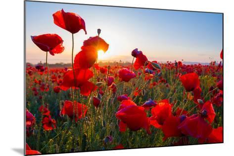 Early Morning Red Poppy Field Scene-Yuriy Kulik-Mounted Photographic Print
