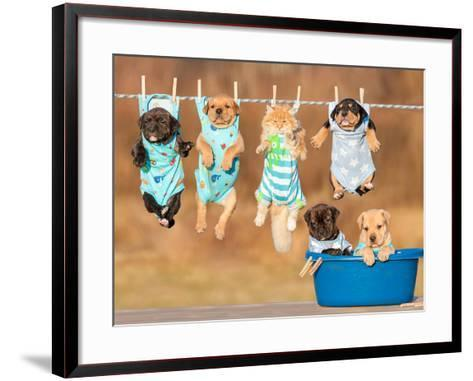 Funny Group of American Staffordshire Terrier Puppies with Little Red Cat Hanging on a Clothesline-Grigorita Ko-Framed Art Print