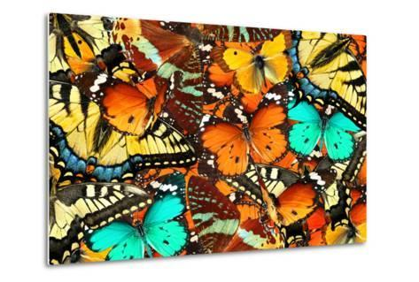 Colorful Butterflies Background. Nature and Wildlife. Insects Collection Abstract-Protasov AN-Metal Print