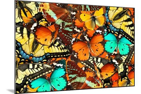 Colorful Butterflies Background. Nature and Wildlife. Insects Collection Abstract-Protasov AN-Mounted Photographic Print