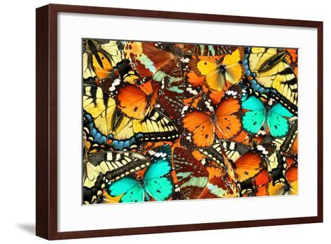 Colorful Butterflies Background. Nature and Wildlife. Insects Collection Abstract-Protasov AN-Framed Art Print