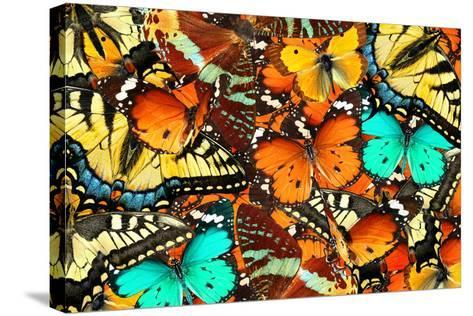 Colorful Butterflies Background. Nature and Wildlife. Insects Collection Abstract-Protasov AN-Stretched Canvas Print