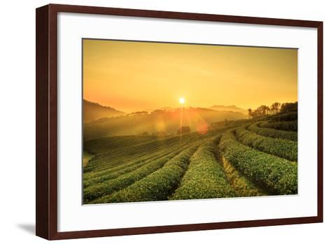 Sunrise View of Tea Plantation Landscape at 101 Chiang Rai Tea,North of Thailand, Vibrant Color & S- DONOT6_STUDIO-Framed Art Print