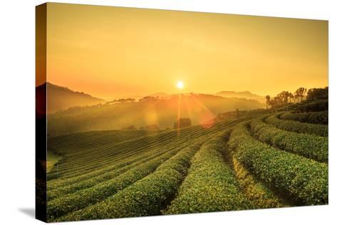 Sunrise View of Tea Plantation Landscape at 101 Chiang Rai Tea,North of Thailand, Vibrant Color & S- DONOT6_STUDIO-Stretched Canvas Print