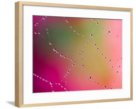 Dewdrops on Spider Web with Colorful Background-Anna Diederich-Framed Art Print