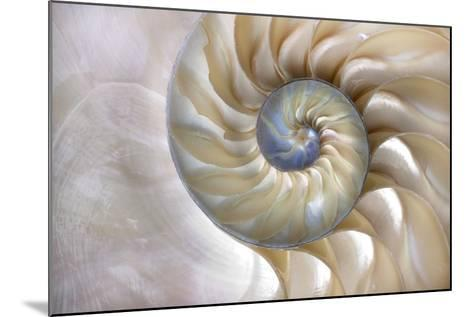 An Amazing Fibonacci Pattern in a Nautilus Shell- Tramont_ana-Mounted Photographic Print