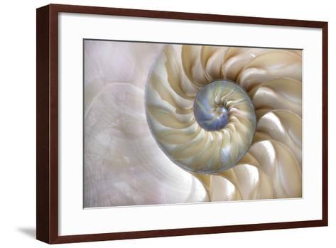 An Amazing Fibonacci Pattern in a Nautilus Shell- Tramont_ana-Framed Art Print