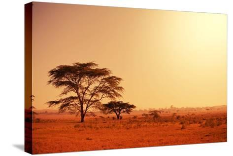 Quiver Tree in Namibia, Africa-Galyna Andrushko-Stretched Canvas Print