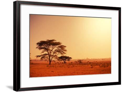 Quiver Tree in Namibia, Africa-Galyna Andrushko-Framed Art Print
