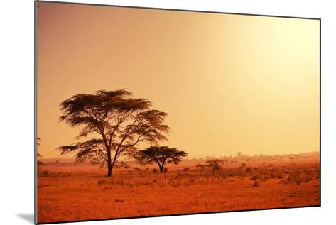 Quiver Tree in Namibia, Africa-Galyna Andrushko-Mounted Photographic Print