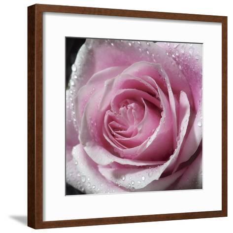 Raindrops & Roses III-Monika Burkhart-Framed Art Print